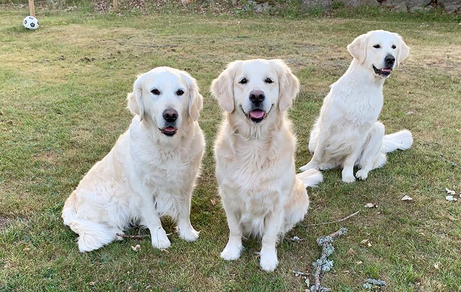 Sweet Touch - Mamma Penny, kompisen Karin och Saga