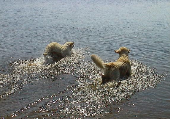 Sweet Touch - Nico och Walter i vattnet.